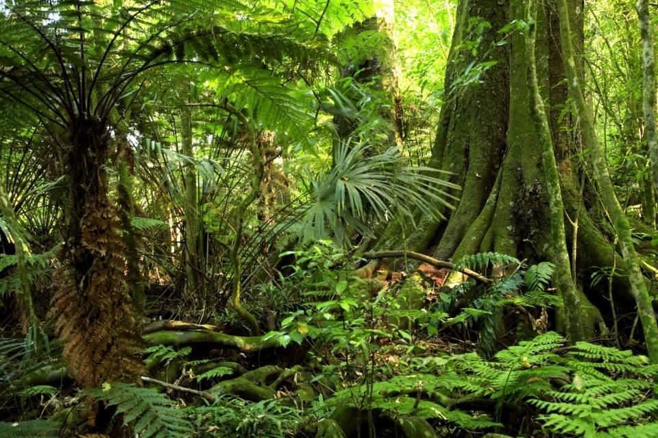 Peliculas Que Transcurren en la Selva o en la Jungla.